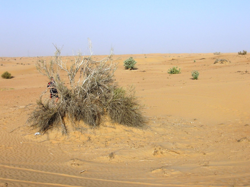 Эмираты сафари