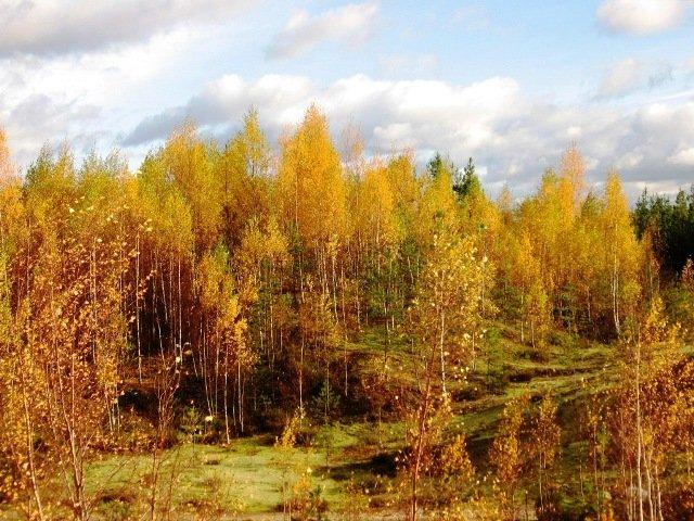 каннельярви лен. область