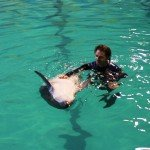 купание с дельфинами в петербурге