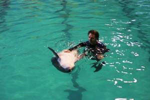 delfin v spb