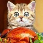 жаренная курица с гарниром