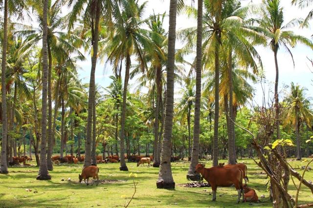 живность на Травангане