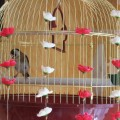 птичьи трели