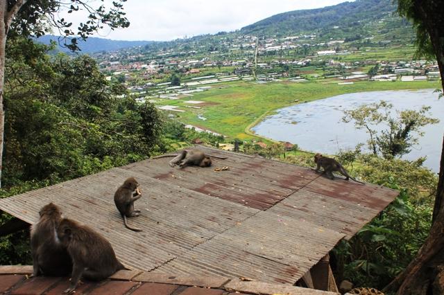 Бали обезьяны