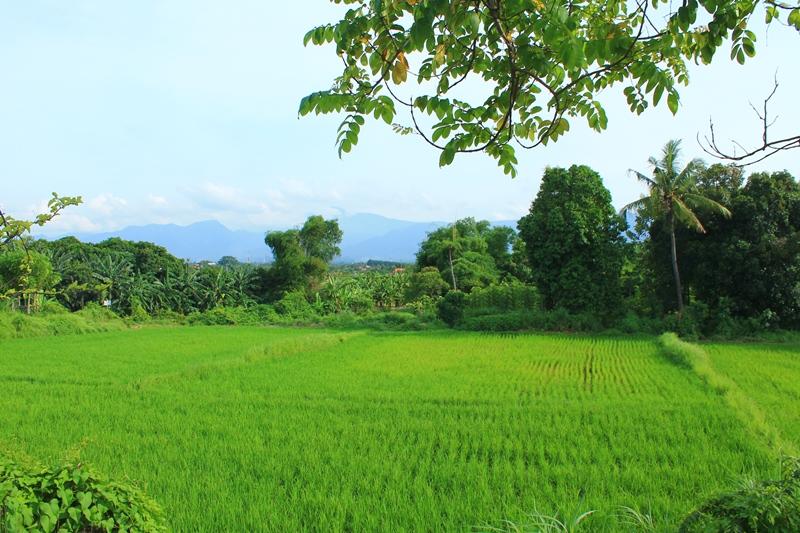 Ловина Бали Индонезия