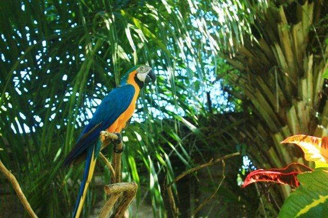 Парк птиц Бали