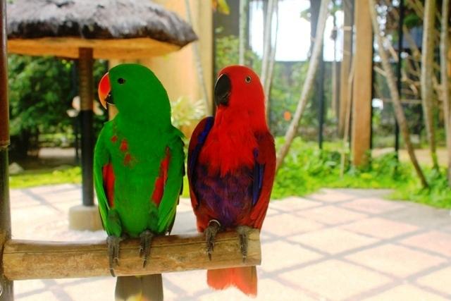 Бали парк птиц