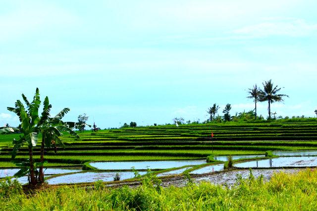 дорога Храм Танах Лот Бали