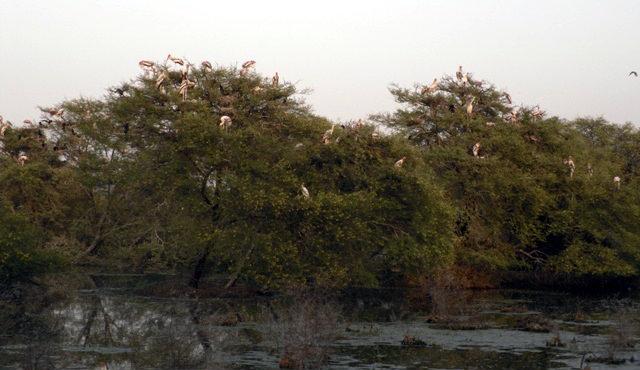 парк Кеоладео Гана