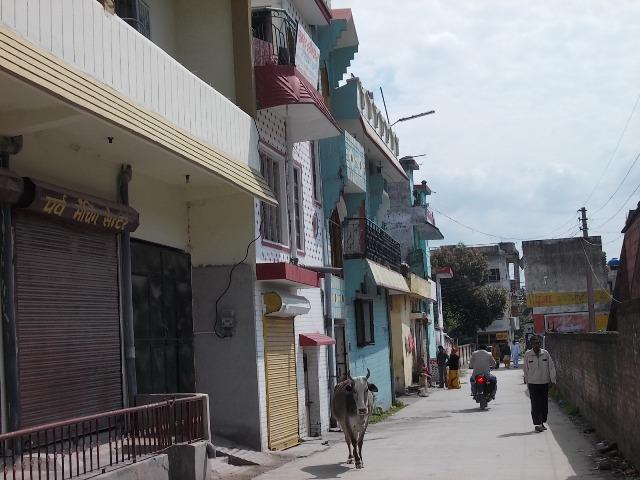 коровы в Индии улица