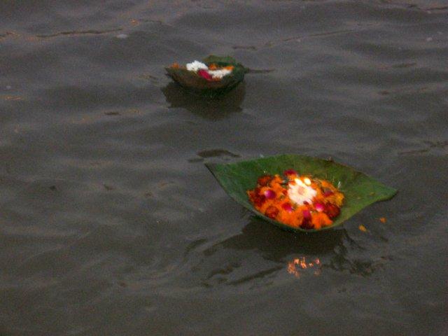 цветы в Ганге