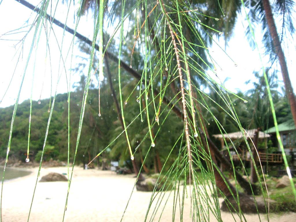 в таиланд летом