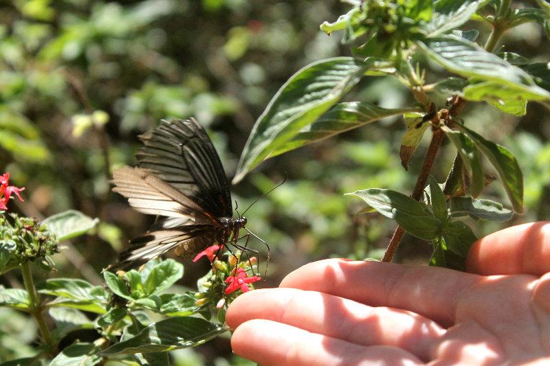 филиппины палаван пуэрто принцесс сад бабочек