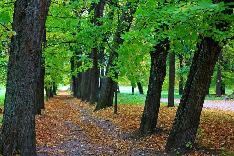 парк Монрепо фото