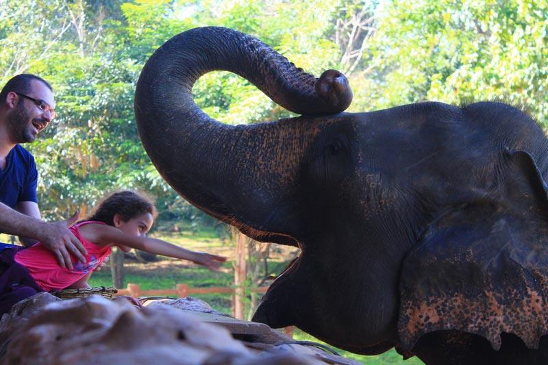 слоновий питомник пиннавела шри ланка кормление слонов сколько стоит