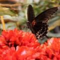 бабочки на цветках