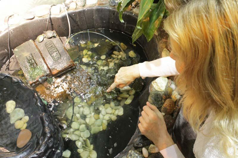 санкт - петербург сад бабочек миндо 11