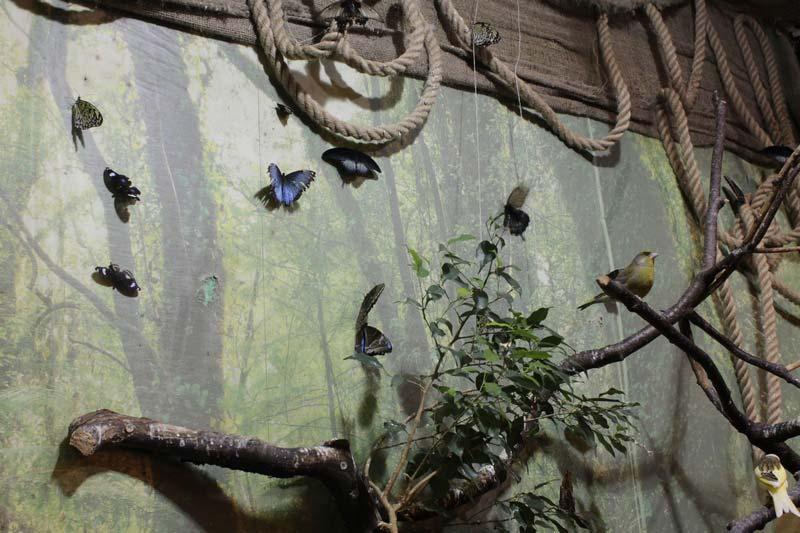 санкт - петербург сад бабочек миндо