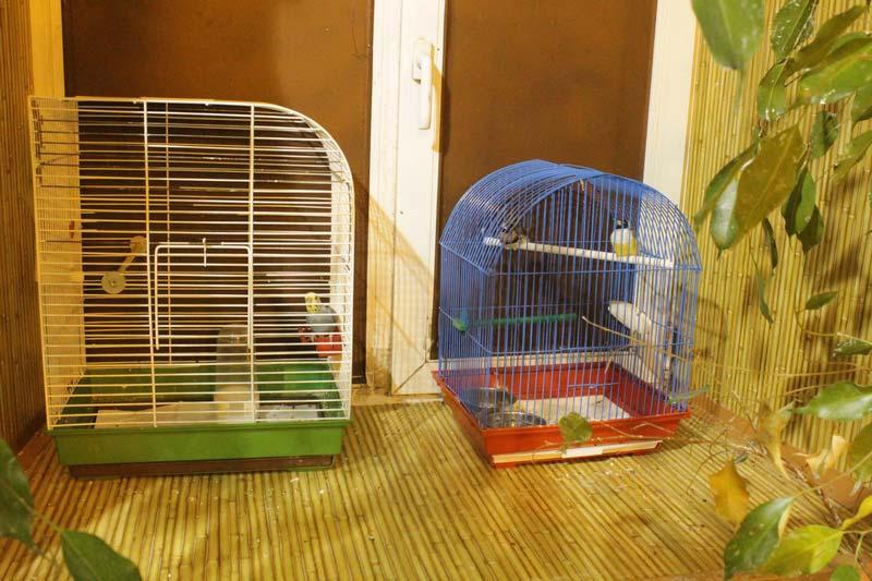 тропический сад птиц санкт - петербург 13