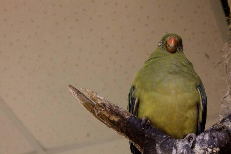 тропический сад птиц 22