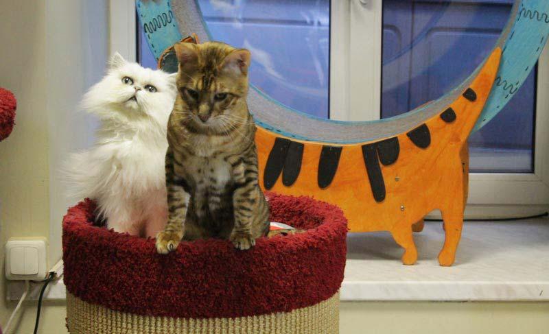 питер республика кошек