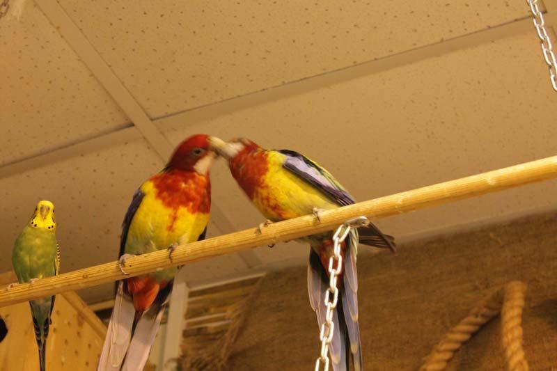 тропический сад птиц санкт - петербург 24