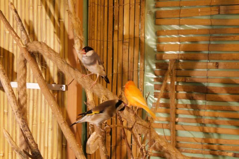 тропический сад птиц 27