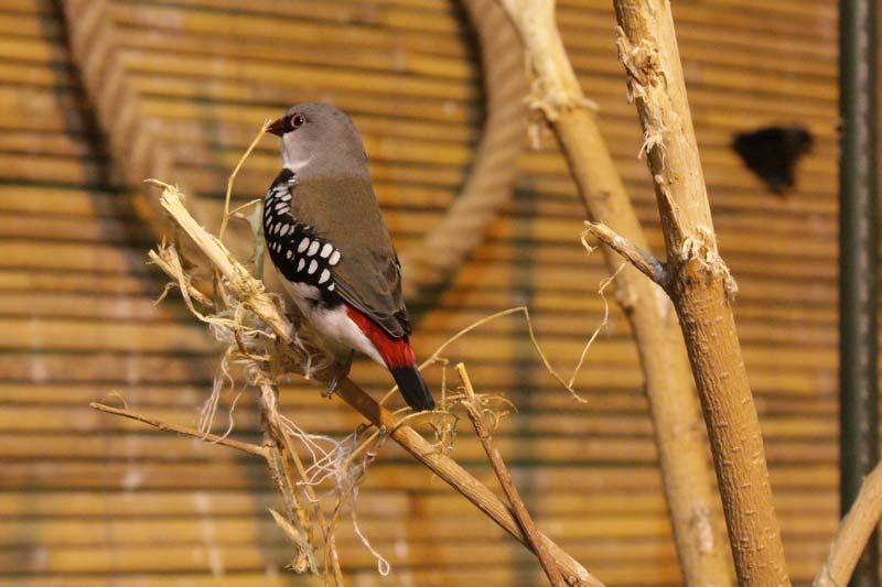 тропический сад птиц 28