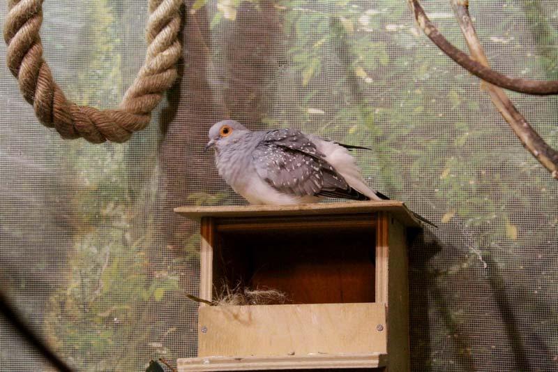 тропический сад птиц санкт - петербург