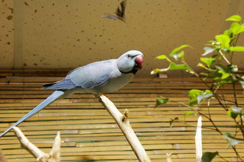 тропический сад птиц санкт - петербург 31
