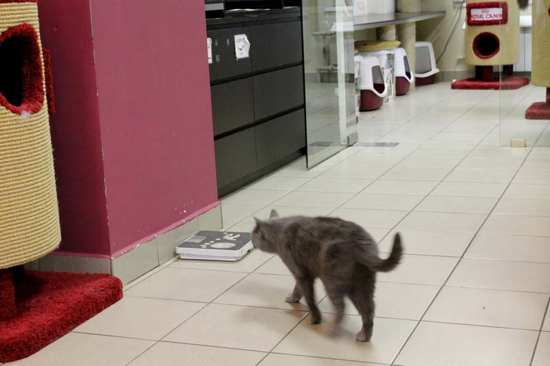 республика кошек санкт петербург 35