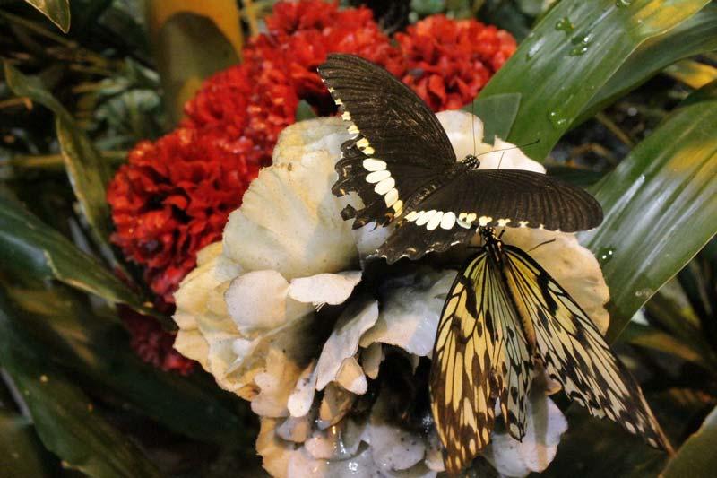 сад живых бабочек миндо 7