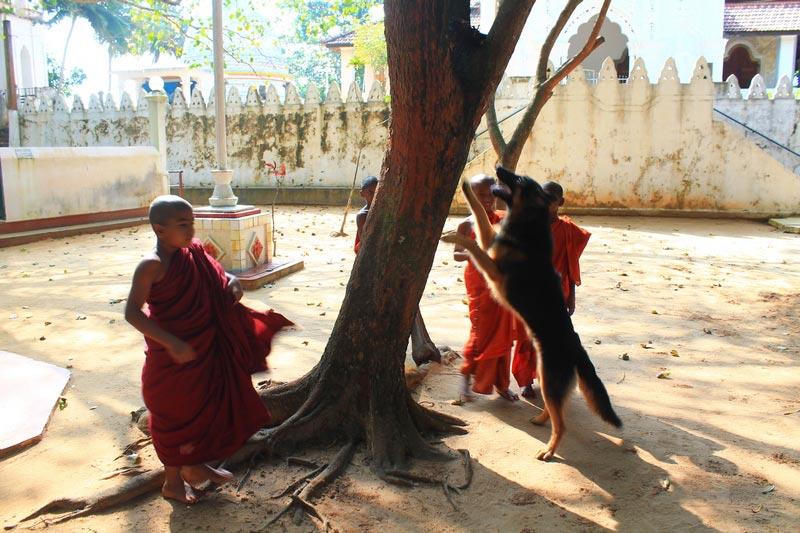 8 монахи шри ланка