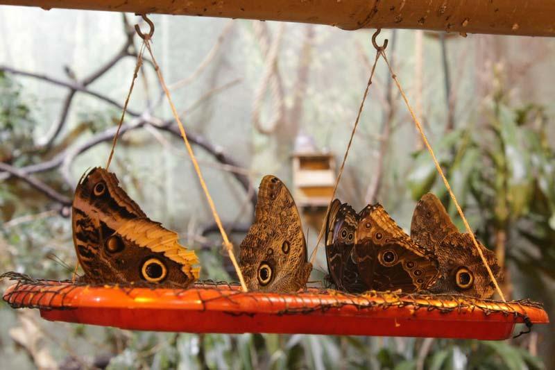 сад живых бабочек миндо 8
