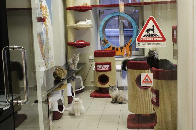 республика кошек санкт петербург 9