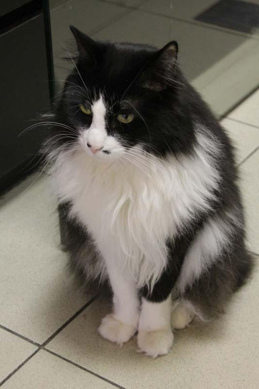 санкт петербург республика кошек породы 14