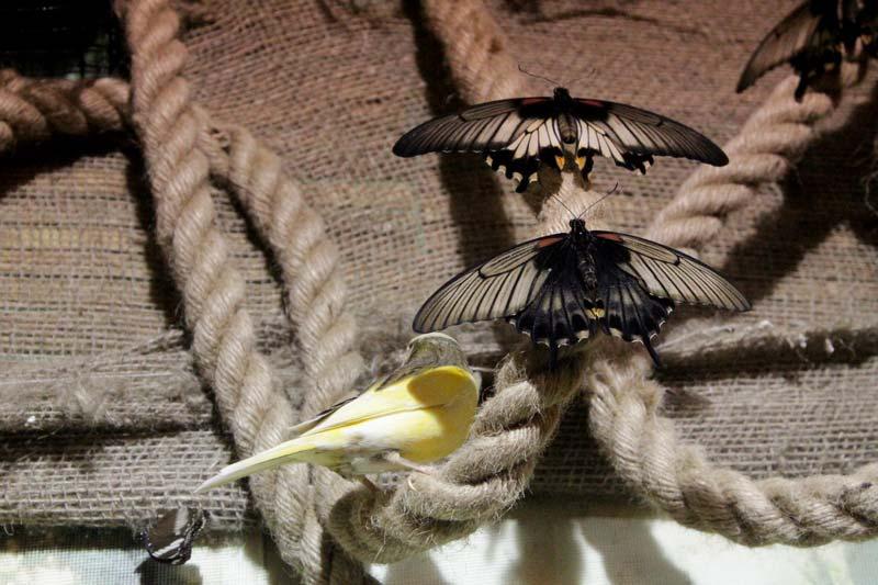 питер сад бабочек миндо 18