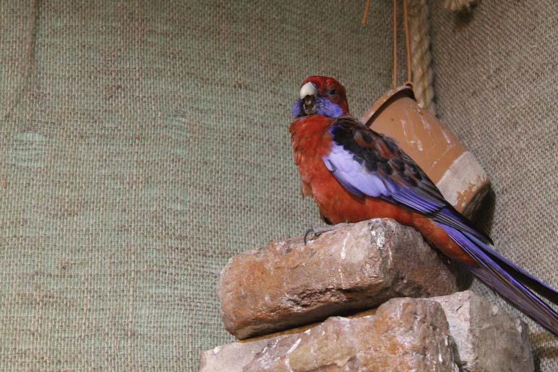 тропический сад птиц 26