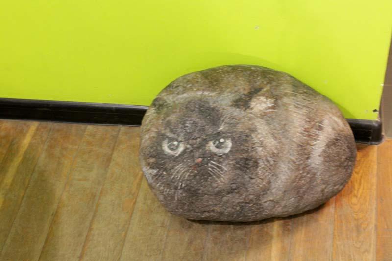 питер республика кошек петербург
