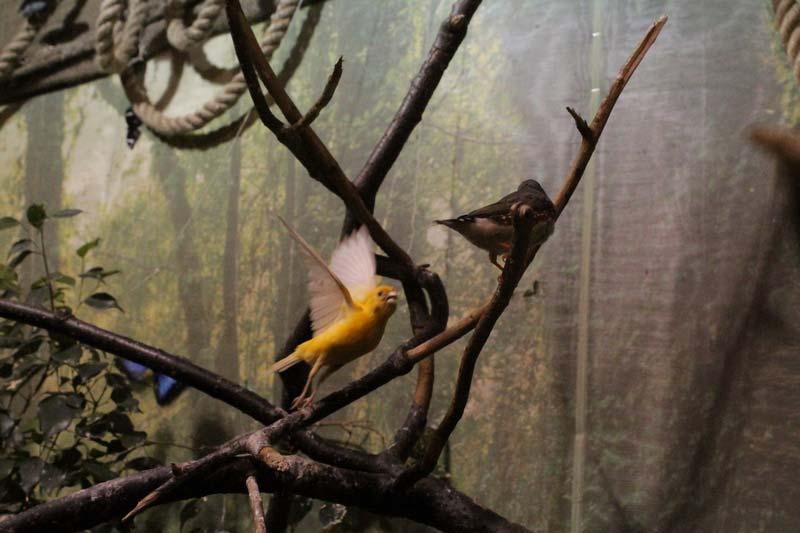 тропический сад птиц