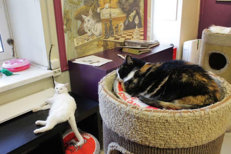 республика кошек санкт петербург