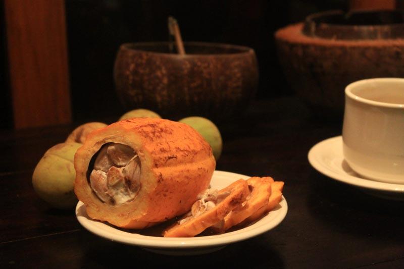 плод-какао-фото-16