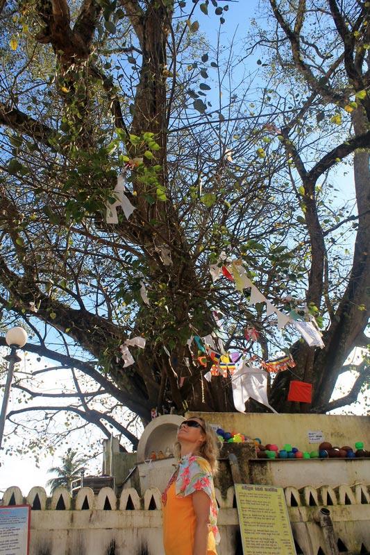 канди-дерево-бодхи-12