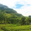 шри-ланка-чайные-плантации-14