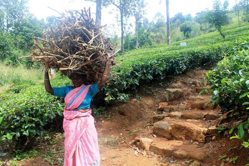 шри-ланка-чайные-плантации-3