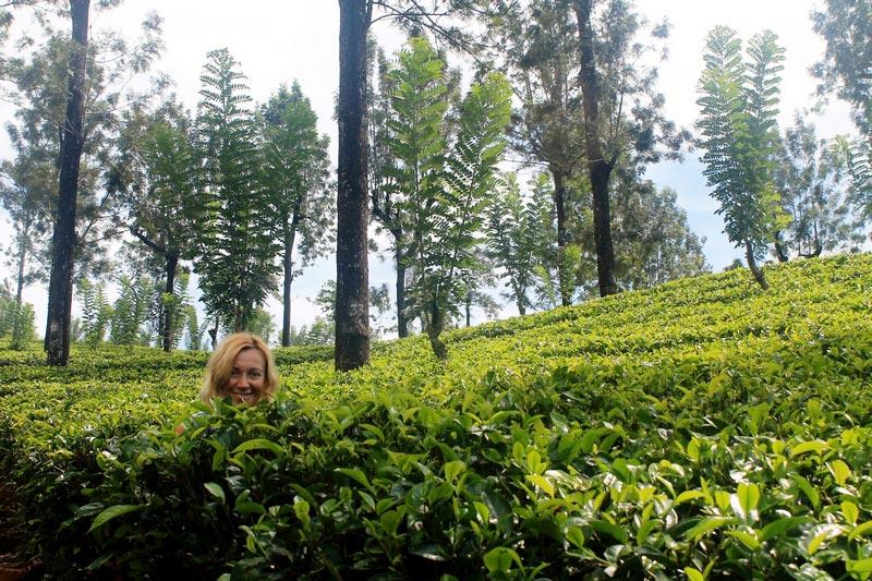 шри-ланка-чайные-плантации-4