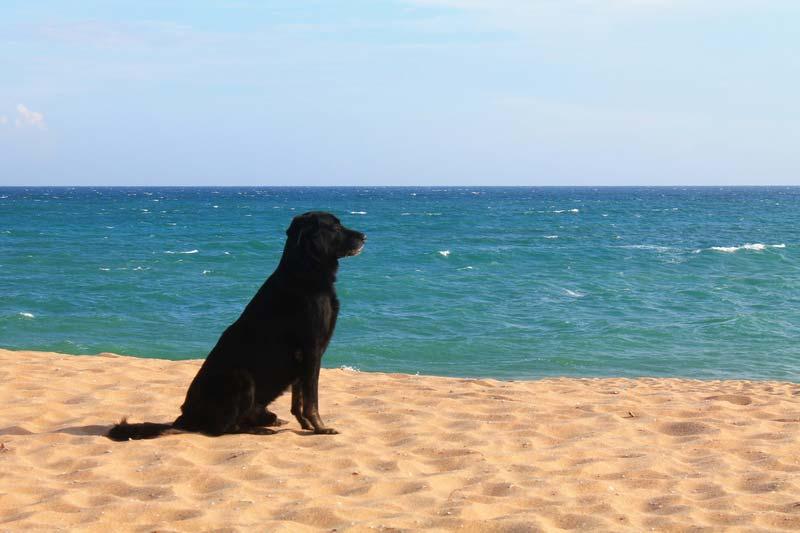 тангалле-собака-и-море