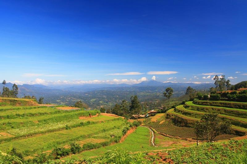 27а-чайные-плантации-шри-ланка-фото