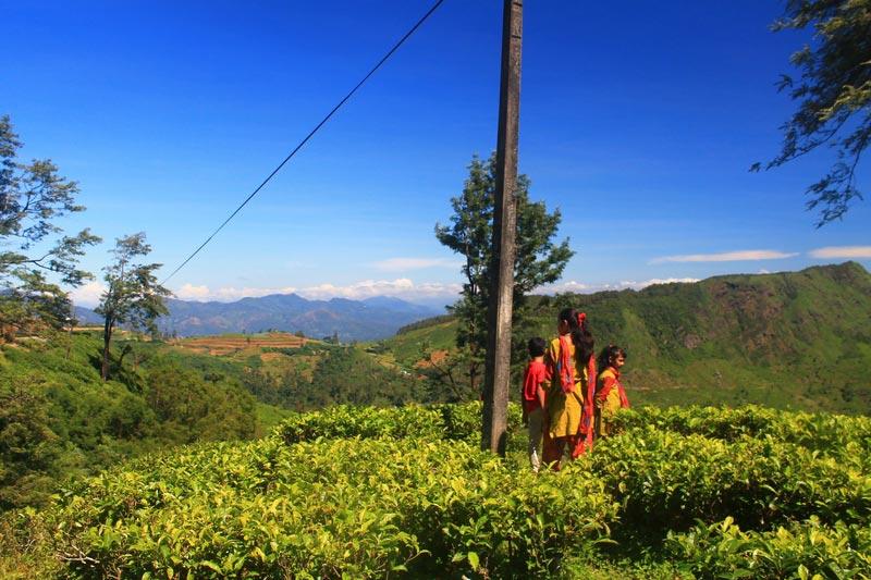 27-шри-ланка-плантации-чая-фото