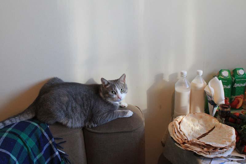кот-и-молоко-фото
